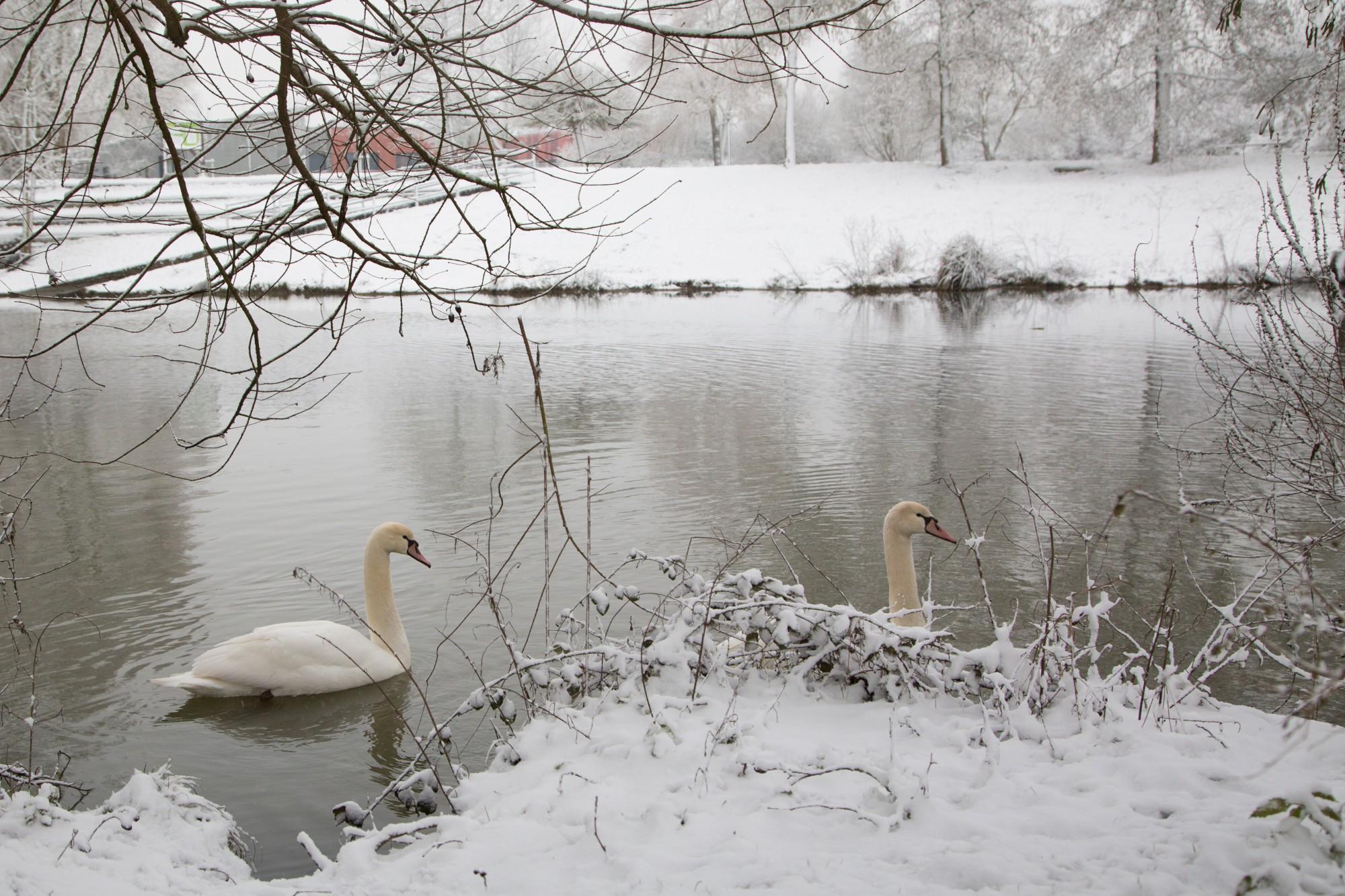 Elancourt sous la neige elancourt for Piscine elancourt