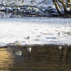 Élancourt sous la neige